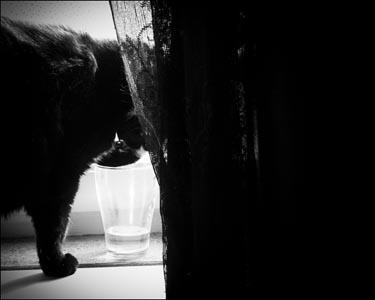 Molly provsmakar vattnet i vattenglaset.