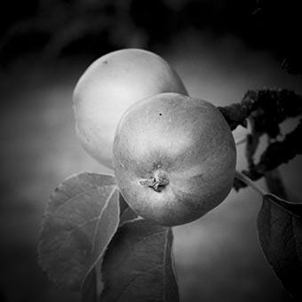 citat | äpplet faller inte långt ifrån trädet